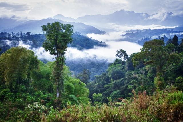 ¿Qué está pasando en el Amazonas?