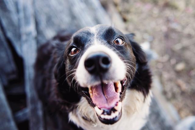Beneficios de tener un perrito