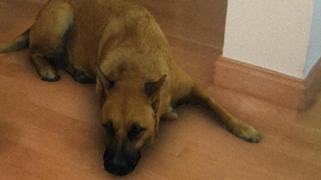 Sasha Dog: El filtro del perro que está en todo Instagram